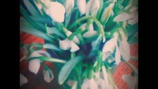 Vlog: 8 березня ♥☺(Привет)))Спасибо за подписку и лайк!!! Вконтакте: https://vk.com/id249714680 Аск (сюда вопросы): http://ask.fm/id249714680 Twitter: https:..., 2015-03-13T07:27:00.000Z)