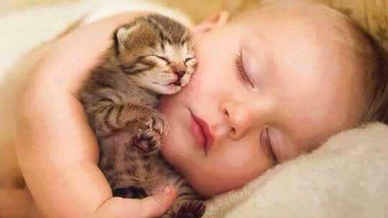 Cute Babies Snuggling Cats 👶😽 Funny Cat loves Baby ...