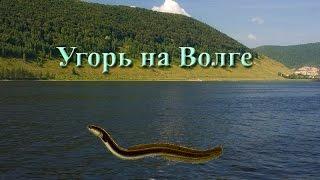 Русская Рыбалка 3.99 Угорь на Волге