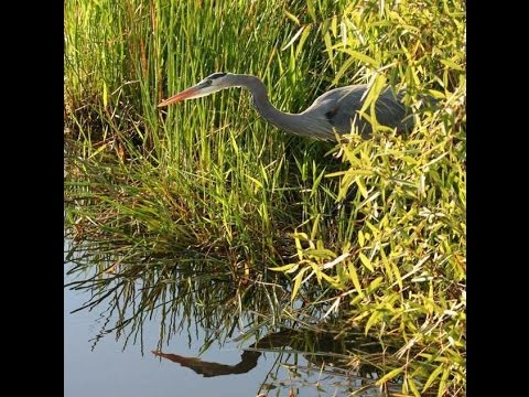 Restoring the Everglades: Understanding the Past is the Key to the Future