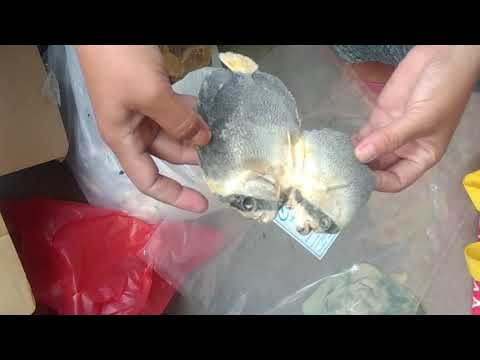Packing Of Bulad (Dried Fish)