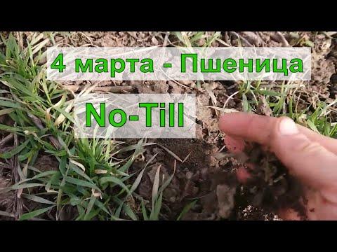 No-Till - Пшеница / Ячмень