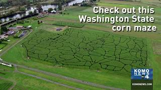 Washington State-themed Corn Maze Opens In Snohomish