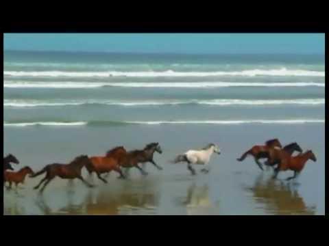 Vết Thù Trên Lưng Ngựa Hoang