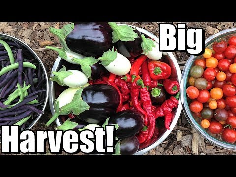 Big October Vegetable Garden Harvest (Zone 5): Local Food at Its Best! 🍅🌶️ 🥗