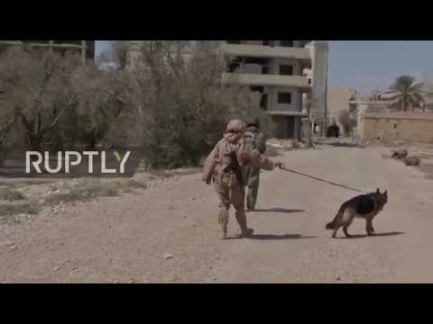 Syria: Russian sappers use latest robotic technology to clear explosives in Palmyra