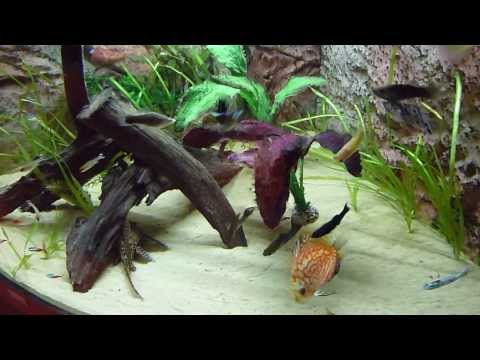 Warm Water Tropical Fish