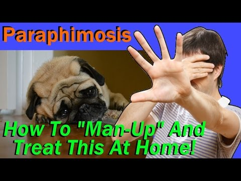 At Home Care & Resolution For a Very Serious Condition with Your Dog Called Paraphimosis