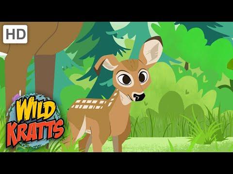 Wild Kratts | Little Buckeroo! |CUTE
