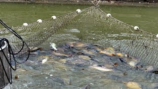 WOW Amazing Fishing - Bangladesh Traditional fishing - How to Catches Fish (Part 1)