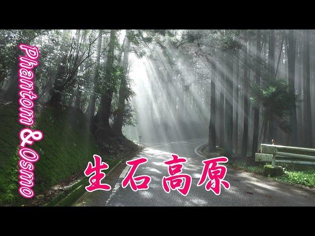 秋のススキ! Japanese silver grass 生石高原(オイシコウゲン) by DJI Phantom & Osmo