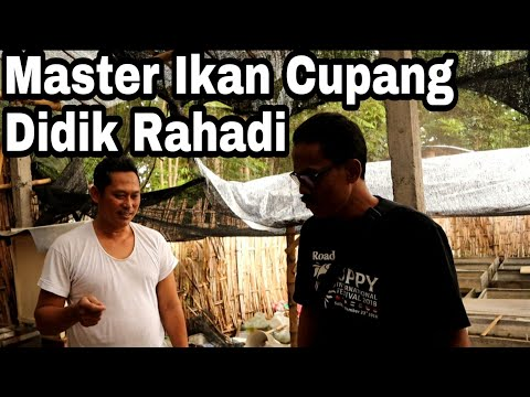 Berkunjung Ke Peternak Ikan Cupang Legendaris Didik Rahadi || Belajar Budidaya Ikan Cupang