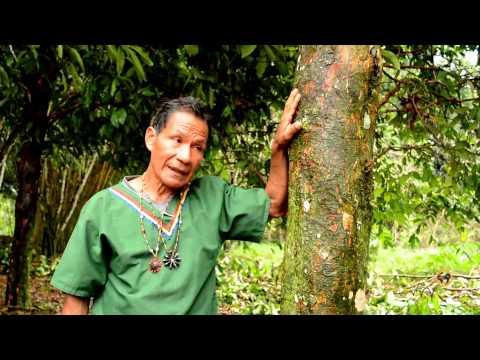 Hopineo presents Shayari Community-Based Tourism, Amazon, Ecuador