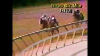 1980 Wood Memorial Stakes (ABC Broadcast)