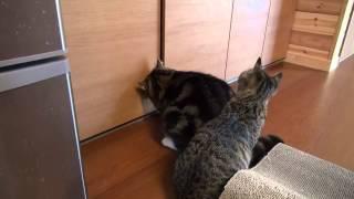 戸棚とねこ。-Maru gets into the cupboard.-