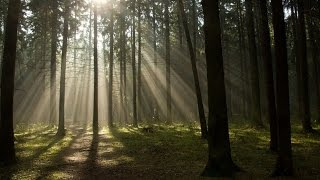 Трагедия  леса России