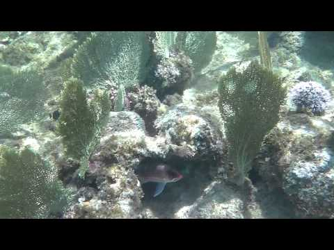Snorkeling Eden Rock George Town, Grand Cayman