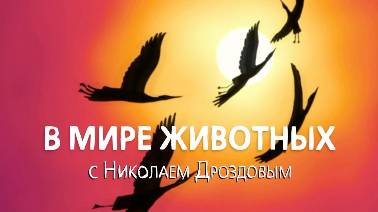 В мире животных с Николаем Дроздовым. Выпуск 58.