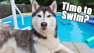 My Dogs Swimming Pool Routine