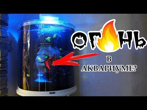 Мастер-класс по запуску аквариума Tetra Aqua Art Explorer Line С ОГОНЬКОМ!