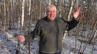 Человек танцует танец в лесу