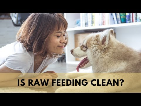 Feeding Your Dog A Raw Diet & Maintaining Cleanliness