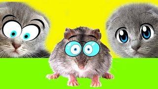 Как Котенок Мурка и котик Мурчик мышь ловили. Сказка про котят с озвучкой