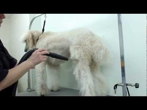 Grooming a Standard Poodle | Time Lapsed