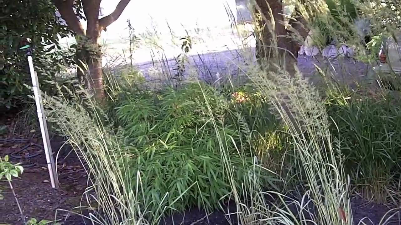 Ornamental grass shade garden for Tall grasses for shade