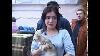 Сингапурская кошка - Все О Породе