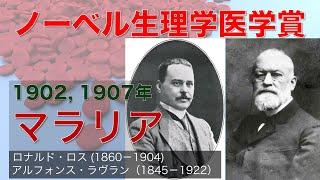 【ゆっくり解説】ノーベル生理学・医学賞 1902年・1907年「マラリア」