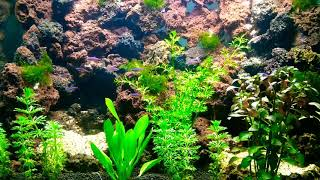 Aquascape semarang (tebing+danau)