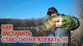 Рыбалка Как заставить стаю клевать Ловля окуня на спиннинг микроджиг