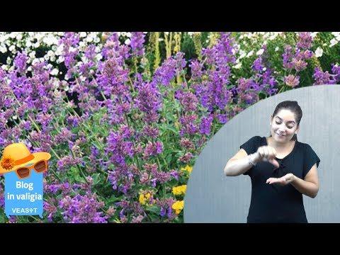 Quali sono le piante migliori per un giardino estivo sempre in fiore? - Blog LIS