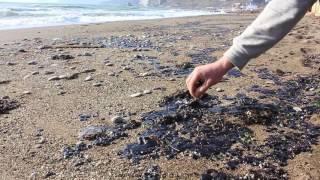 Судак - мазут на пляже (28 ноября 2016)(, 2016-11-28T12:01:57.000Z)