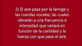 Cómo funciona la voz - El aparato fonador