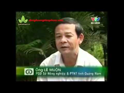 Nuôi gà rừng - nghề mới ở Tiên Phước, Quảng Nam