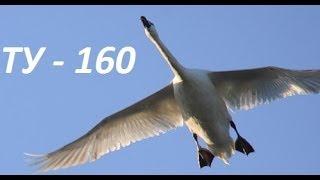 Лебедь мира ТУ-160 Атомные крылья России