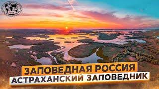 Заповедная Россия. Астраханский заповедник | @Русское географическое общество