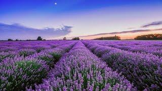 Lavender Hills - Instrumental piano tutorial lesson -  Brian Crain