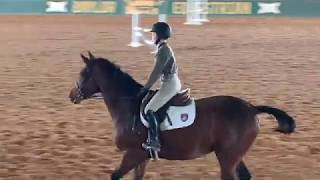 Emmy Dolin and Solo - Baylor University Winter Camp NCAA Equestrian Over Fences - December 8, 2019