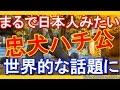 【海外の反応】「まるで日本人みたいだ」 忠犬ハチ公の物語が今なお世界的な話題に!