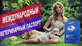 Международный ветеринарный паспорт | Обзор международного ветеринарного паспорта