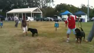 Rottweiler Champ Show Qld 2010 Best In Show