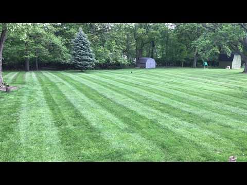 Spencer & Kristen - Man Calls In a Wild Duck In His Backyard