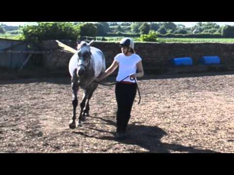 retraining of and exrace horse. 2 years with poser.