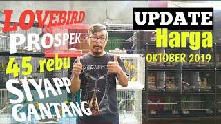 Update HARGA LOVEBIRD, di bulan Oktober 2019, banyak banget artis yang beli disini