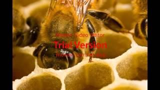 الاعجاز العلمي في قوله تعالى (واواحى ربك الى النحل .. )