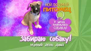 видео Первый день щенка в доме