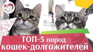 5 пород кошек-долгожителей